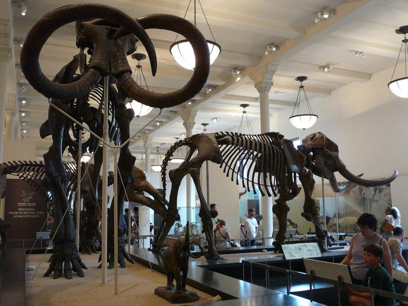 El Museo Americano de Historia Natural2