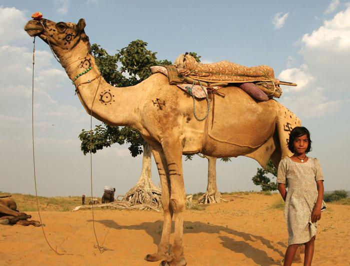 Festival anual de camellos en Pushkar