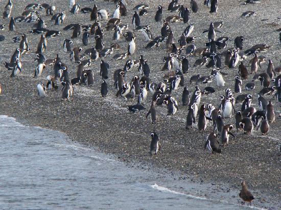 pinguinera ushuaia