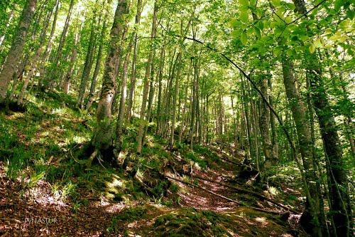 Bosque de Lindes
