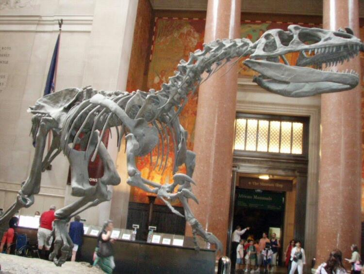 El Museo Americano de Historia Natural